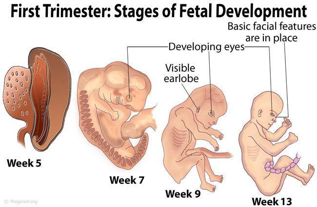 Первый триместр беременности болит голова
